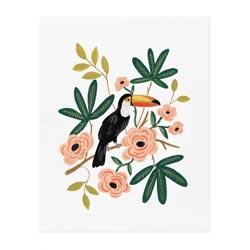 affiche toucan